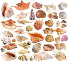 Set Of Seashell Collection Stock Photo Wikki33 2543153