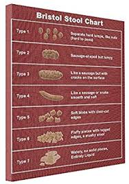 Vetiver Abstract Art Canvas Bristol Stool Chart Scale Canvas Print