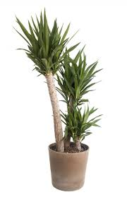 garden cool house plants attractive lovely types of large house plants 86 best cool indoor