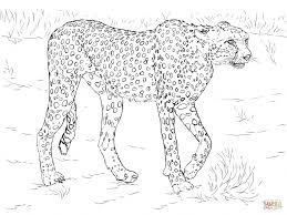 Printable Realistic Animal Coloring Pages At Getdrawingscom Free