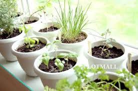 terrace garden and vegetable farming tips design ideas for
