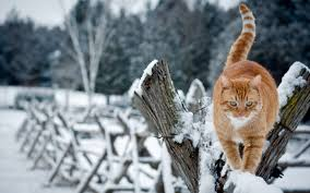 Free Wallpaper Winter Cat (Page 2 ...