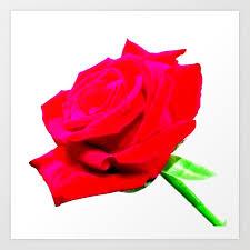 single red rose flower art print by