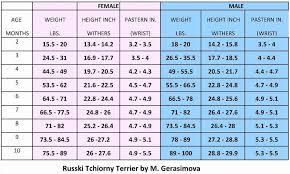 Sheltie Growth Chart Weight Www Bedowntowndaytona Com