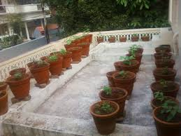 Terrace Kitchen Garden Teens Kitchen Garden Terrace Kitchen Garden I