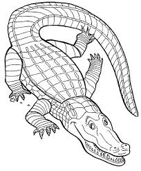 Small Picture 43 best Crocodiles images on Pinterest Crocodile Coloring and Kids