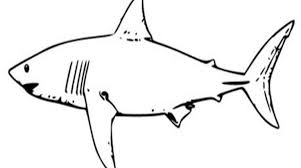 Small Picture Smart Placement Shark Coloring Pages Printable Ideas Gekimoe 77617