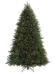 Black Spruce Tree-1