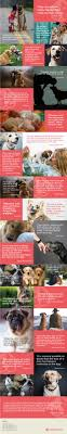 Dog Best Friend Quotes Mesmerizing 48 Beautiful Quotes That Prove Dogs Are Our Best Friends DogBuddy Blog