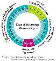 Typical Menstrual Cycle Chart Pin On Health And Fitness