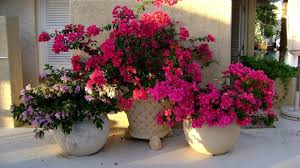 beautiful flower pots 11