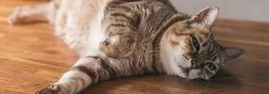 Common Problems with Aging <b>Cats</b> | Hill's Pet