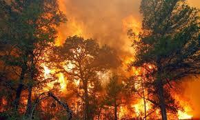 Hasil gambar untuk hutan riau