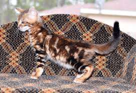 kittens in florida