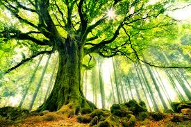 Mother Tree Wall Mural Photo Wallpaper