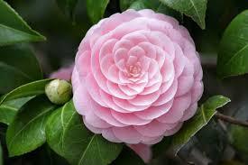 Image result for hoa