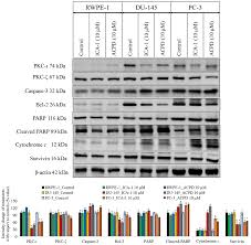 Inhibition of atypical protein kinase C‑ι effectively reduces the ...