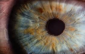 900 Eye Images Download Hd Pictures Photos On Unsplash