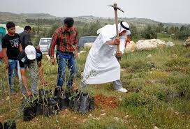 Palestinian Group Launches Tree Planting Program To Halt Israeli