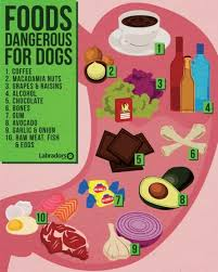 What Can Dogs Eat Chart Dog Safe Food Chart Ideas What To Feed Your Dog