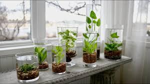 how to make an indoor water garden garden answer