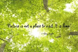 Beautiful Greenery Quotes Best of 24 Of The Most Beautiful Quotes About Nature