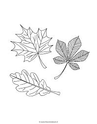 Bladeren Leaves Kleuren Is Leuk