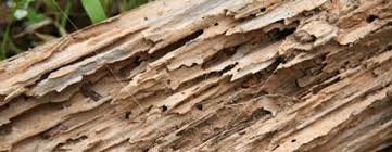 Image result for termite images
