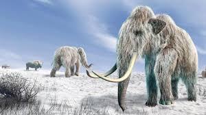 La cada vez más cercana posibilidad de clonar especies de animales  extinguidas - BBC News Mundo