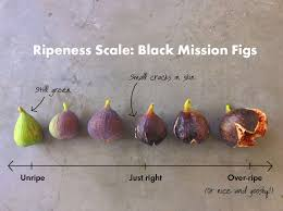 How To Pick The Perfect Fig Fig Recipes Fruit Recipes Fruit