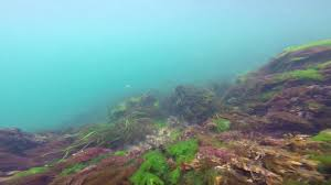 Cape Cod Canal Rov With Mma Mrm 19 May 2019
