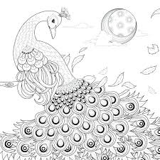 Graceful Peacock Coloring Page Stock Vector Illustration Of Adult