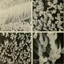 biology essays file advances in herpetology and evolutionary  file advances in herpetology and evolutionary biology essays in file advances in herpetology and evolutionary biology
