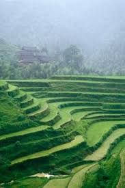 chinese rice field.  Rice Rice Fields In China Produce Less Methane Than They Did The  1980sPunchstock For Chinese Field E