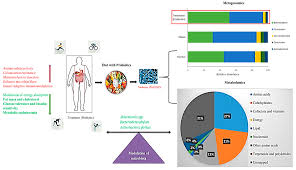 Childhood Obesity Pie Chart Microorganisms Free Full Text Gut Microbiome Modulation