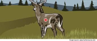 Deer Vitals Chart Where Should I Shoot A Whitetail Deer