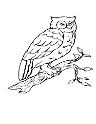 Small Picture Bird Coloring Pages Owl Page adult