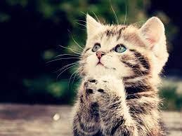 Cute Kitten Wallpaper ...