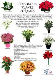 poisonous plants for cats cat plants safe plants for cats cat care tips