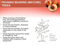 Tips For Planting Fruit Trees Apple Tree  Garden Food Crops When Do You Plant Fruit Trees