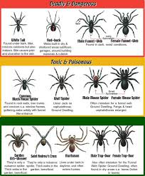 Spider Bite Identification Chart Pictures How To Treat A Spider Bite 5 Home Tips Home Remedies