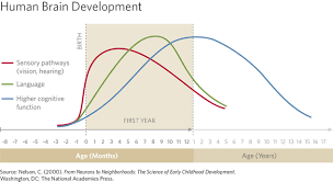 Human Brain Development Chart Educare