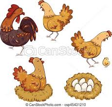 Chicken Life Cycle Chart