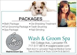 wags wash and groom spa