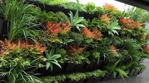 Small Picture Homelife How To Create Vertical And Rooftop Gardens In Australia