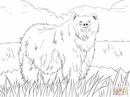 Grizzly Bear Coloring Pages Alaskan Grizzly