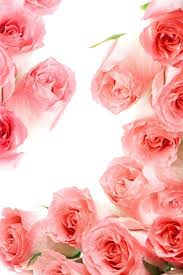 cute roses wallpapers for phone