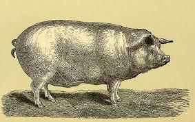 Image result for pig war of 1859
