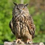 bird of Minerva