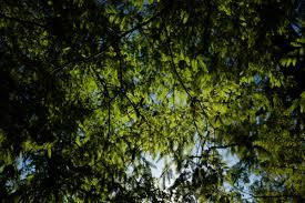 Wallpaper : Japan, sunlight, nature, reflection, branch, green, jungle,  Leica, Tokyo, rainforest, Jp, light, tree, autumn, leaf, flower, season,  vegetation, ...